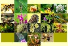 разные виды животных и растений