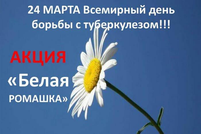 белая ромашка символ дня