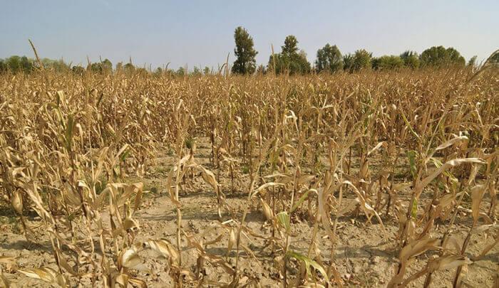 засуха в России