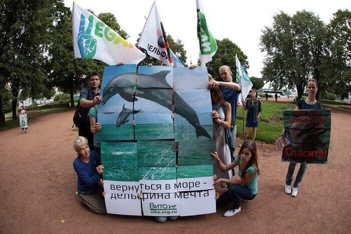 акция в защиту китов и дельфинов