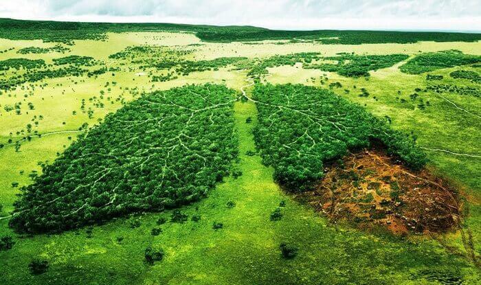 сохранение леса