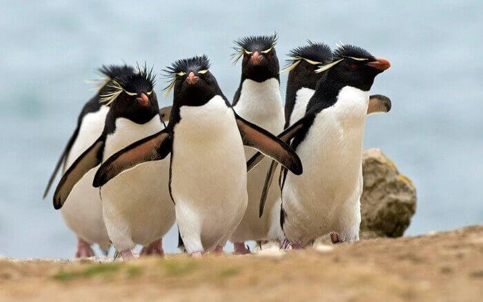 пингвины на суше