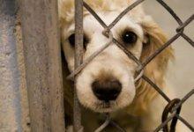 Международный день акций за принятие Декларации прав животных