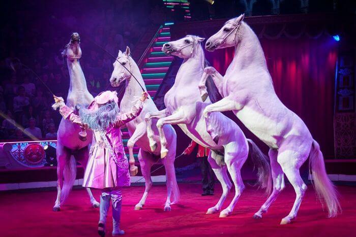 дрессированные лошади
