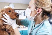 медицинский осмотр животных