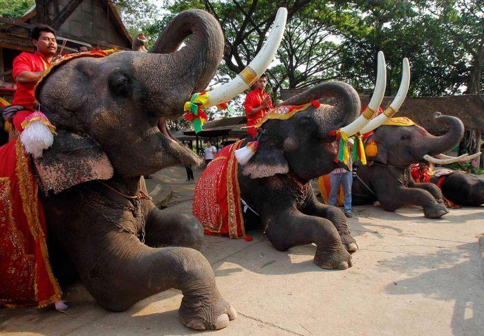 день защиты слонов