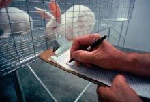 подопытные кролики