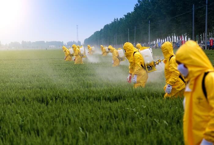 обработка чая пестицидами