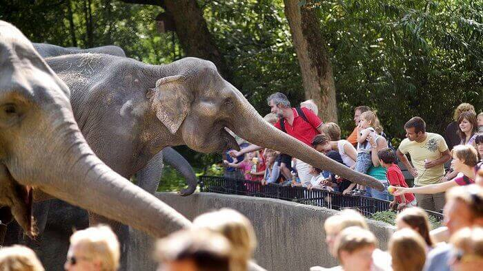 Вольер со слонами зоопарка Гамбурга