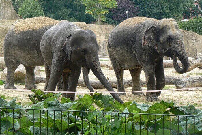 Картинки по запросу Всемирный день защиты слонов в зоопарках