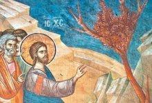 иссушение Господом смоковницы